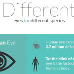 different eyes for different species infographic 1