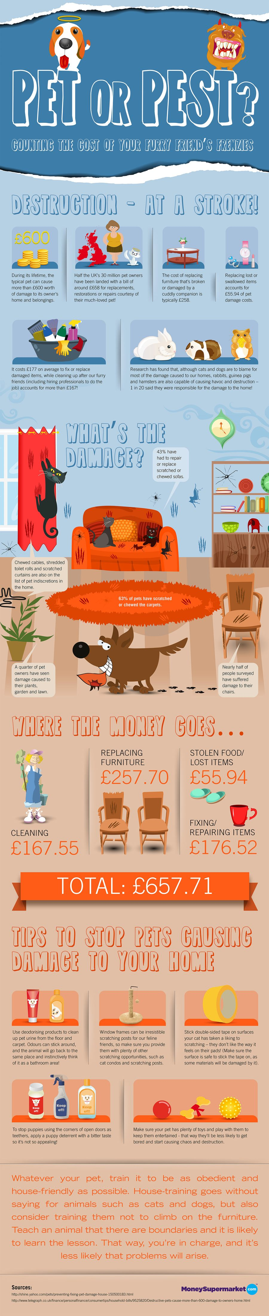 pet or pest infographic