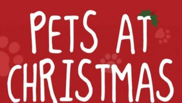 pets at christmas infographic 2