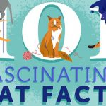 101 Fascinating Cat Facts Infographic1